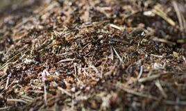 Hormigas del trabajo en equipo fotografía de archivo libre de regalías