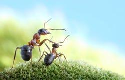 Hormigas, en cuidado de niños y la protección, concepto Fotografía de archivo libre de regalías