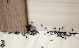 Hormigas en la casa foto de archivo libre de regalías