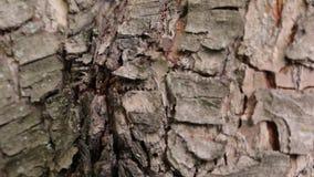 Hormigas en la corteza de un árbol almacen de video