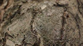 Hormigas en la corteza del árbol almacen de metraje de vídeo