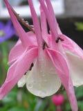 Hormigas en la flor Fotos de archivo