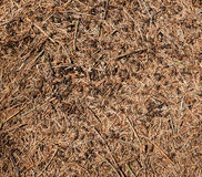 Hormigas en la tierra Fotos de archivo