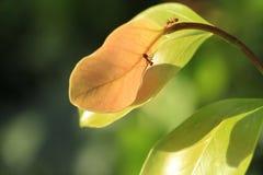 Hormigas en las hojas imágenes de archivo libres de regalías