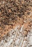 Hormigas en un hormiguero en el tronco de un árbol caido viejo Imágenes de archivo libres de regalías