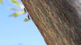 Hormigas en un tronco de un árbol almacen de metraje de vídeo