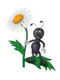 Hormigas en una margarita Foto de archivo