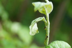 Hormigas en una rama Imagen de archivo
