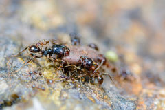 Hormigas hermosas Fotos de archivo
