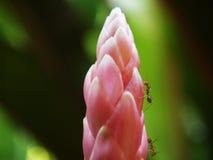 Hormigas hermosas de la flor Fotografía de archivo