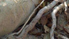Hormigas negras que corren en las ramas de árbol que mienten en la tierra en cierre del bosque encima de las hormigas salvajes qu almacen de video