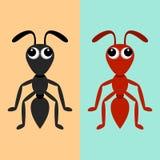 Hormigas negras y rojas Foto de archivo
