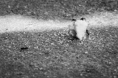 Hormigas que atacan las migas de la comida Imagen de archivo