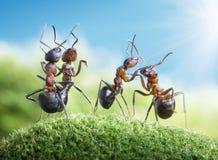 Hormigas que bailan bajo el sol Fotografía de archivo
