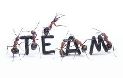 Hormigas que construyen las personas con las cartas, trabajo en equipo de la palabra Foto de archivo