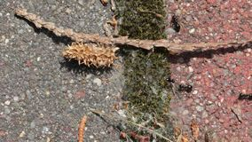 Hormigas que corren alrededor metrajes