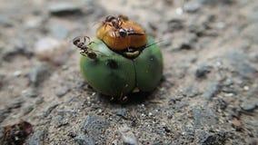Hormigas que intentan moverlo metrajes