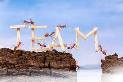 Hormigas que llevan al equipo de la fraseología Imagen de archivo