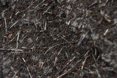 Hormigas que se arrastran en el hormiguero fotografía de archivo