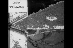 Hormigas que se arrastran en la pared en el objeto expuesto de Ant Village en el parque zoológico de Los Ángeles, los años 40 metrajes
