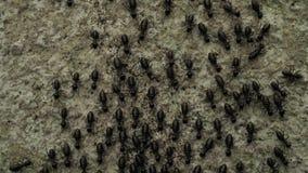 Hormigas que se mueven cerca para arriba almacen de metraje de vídeo
