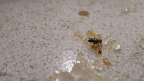 Hormigas que se mueven cerca para arriba metrajes