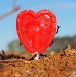 Hormigas que trabajan con amor Foto de archivo