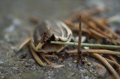 Hormigas que trabajan en proyecto de construcción común foto de archivo libre de regalías