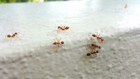 Hormigas rojas Fotos de archivo libres de regalías