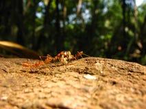 Hormigas trabajadoras Imagenes de archivo