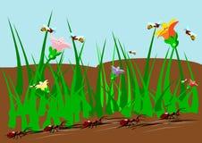 Hormigas y insectos de las abejas Imagen de archivo libre de regalías