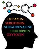 Hormone Stockbild