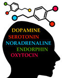 Hormone stock abbildung