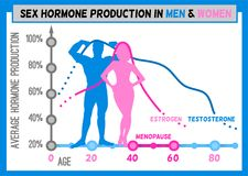 Hormone production chart. Sex hormone production in men and women. Average percentage from the birth to the age of eighty years. Beautiful vector illustration Royalty Free Stock Photo