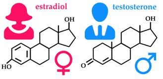 Hormoner stock illustrationer