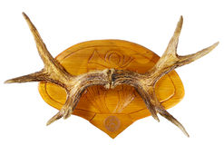 horn łosia zdjęcie royalty free