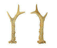 Horn of a deer Royalty Free Stock Image