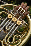 Horn detail. S Royalty Free Stock Photo