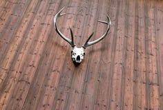 Horn på kronhjort från hjortar på väggen Royaltyfria Bilder