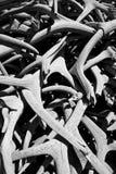 Horn på kronhjorthög i svart Arkivfoton