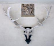 horn på kronhjorthjortar Fotografering för Bildbyråer