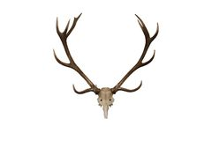 horn på kronhjorthjortar royaltyfri fotografi
