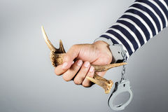 Horn and shackle.Concept of criminal acts. Horn and shackle.Concept of criminal acts and the illegal wildlife trade Royalty Free Stock Images