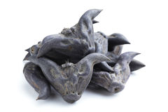 Horn Shaped Water Caltrop Stock Photo