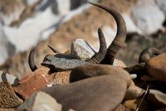 Horn und Tal Tibet Lizenzfreie Stockbilder