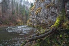 Hornad河, Slovensky拉杰斯洛伐克天堂,斯洛伐克 库存照片