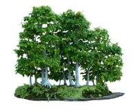 Hornbeam Bonsai Royalty Free Stock Images