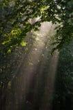 Hornbeam branches in light. Of sunrise Royalty Free Stock Photos