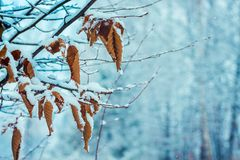 A hornbeam with dried leaves on a blurry background of snow-cove. Red trees, a free space for the inscription on the right Royalty Free Stock Photography