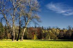 The hornbeam forest Stock Photo